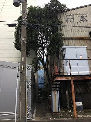 樹木の伐採事例