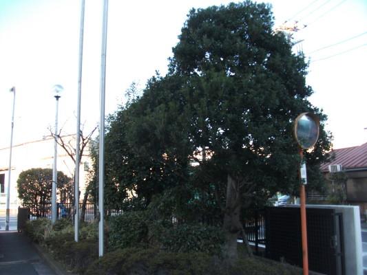 樹木剪定事例